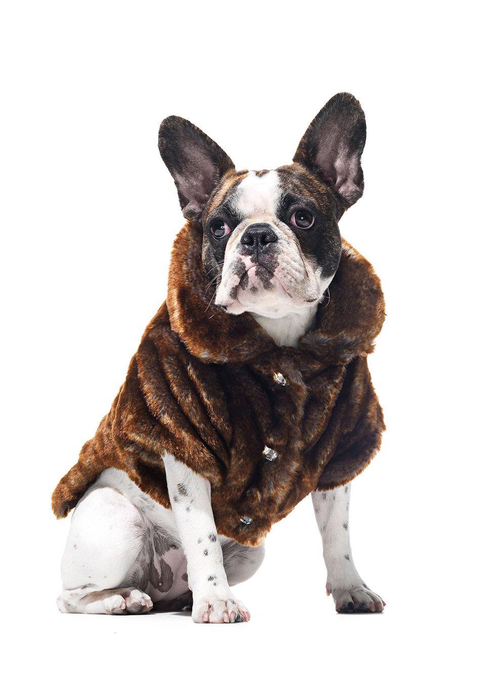Park Avenue Faux Fur Pet Jacket In Chinchilla Pets Dog Jacket
