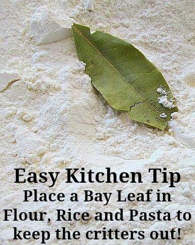 Use Bay Leaves To Prevent Bugs From Attacking Your Dried Stores Cooking Tips Long