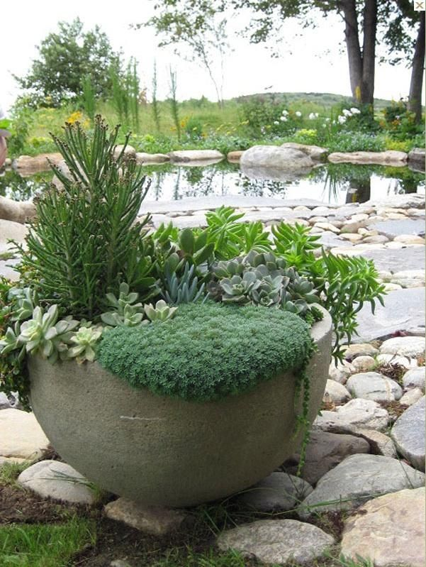 A container of succulents at the edge of the pond across the water a