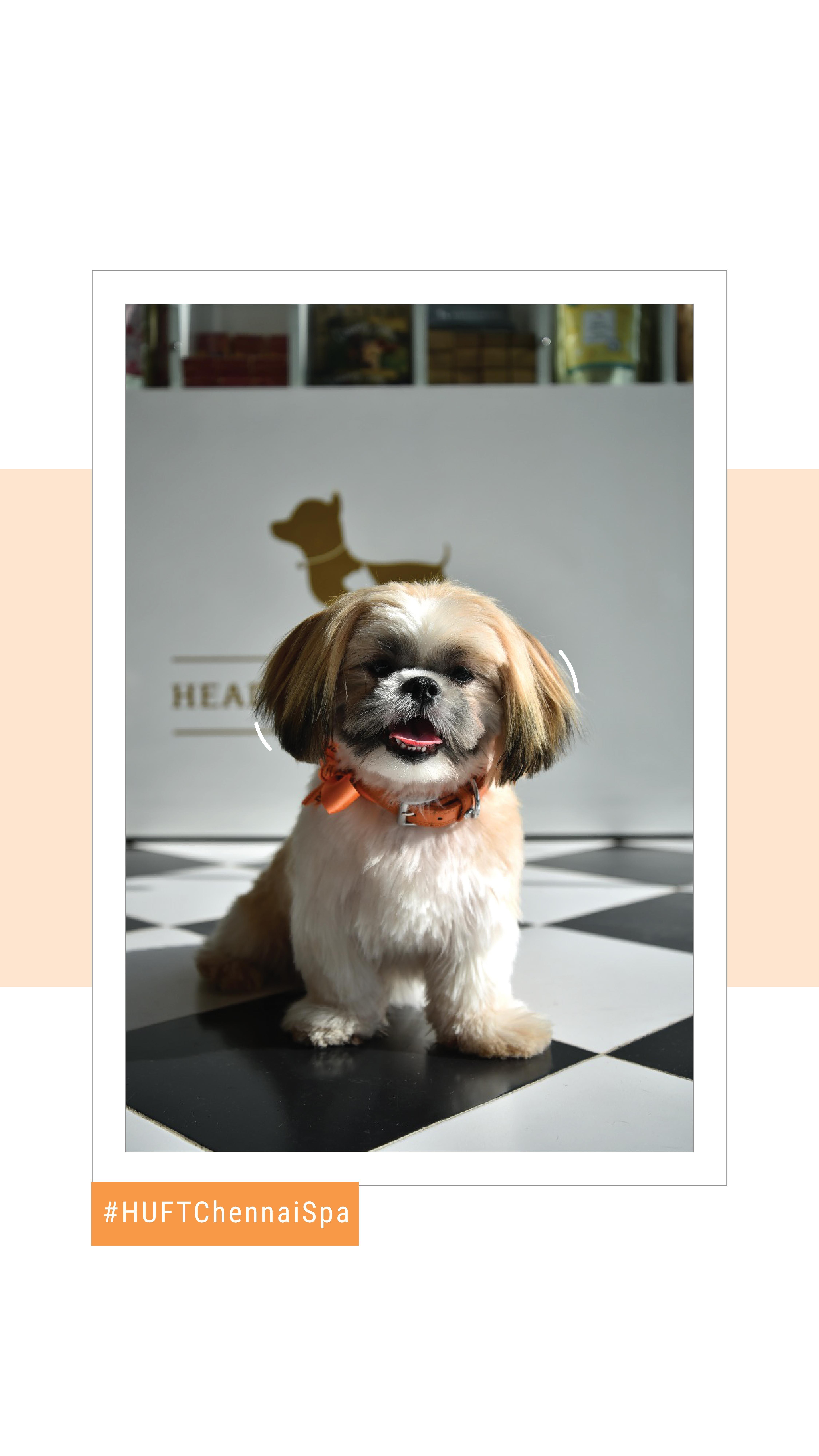Chennai Spa Headsupfortails Buy Pets Online Pet Supplies Pets