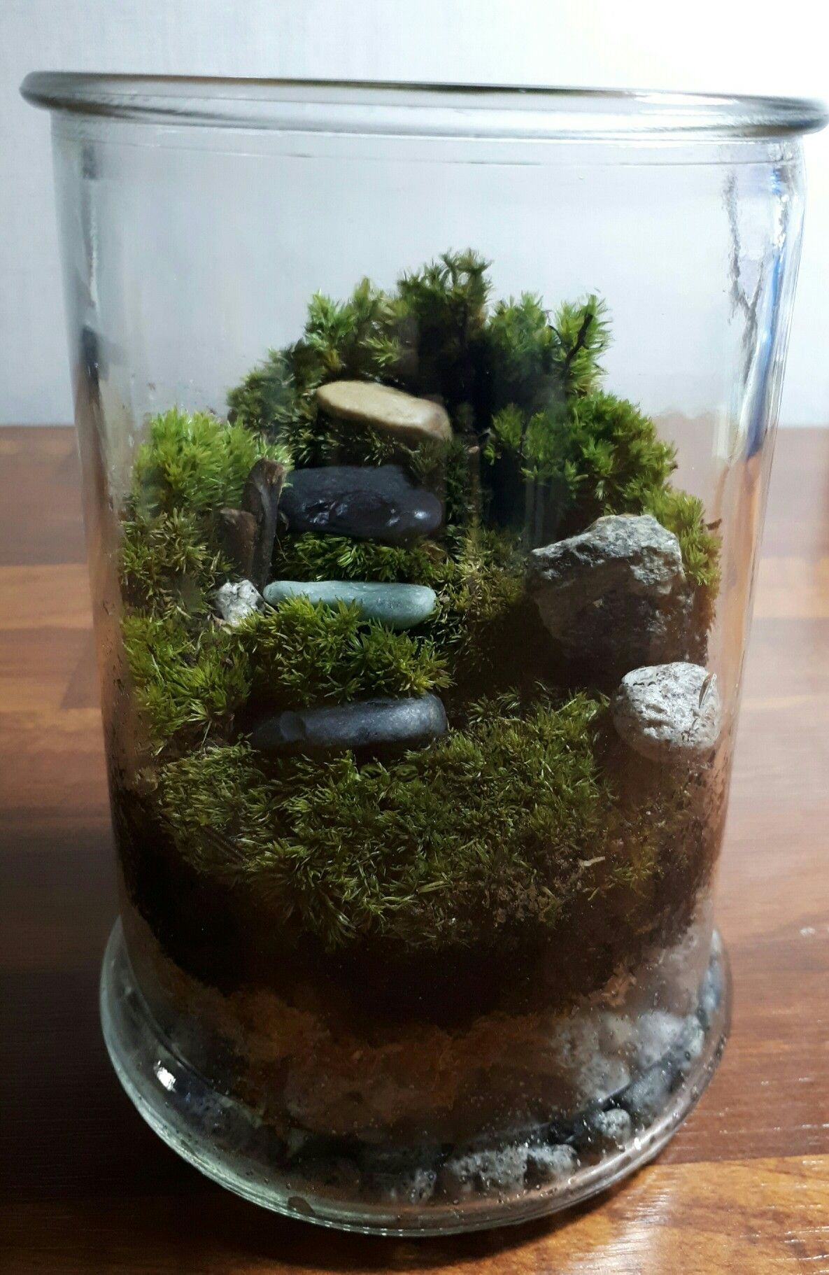 Moss Terrarium Bottle Glass Terrarium Terrariums Miniature And