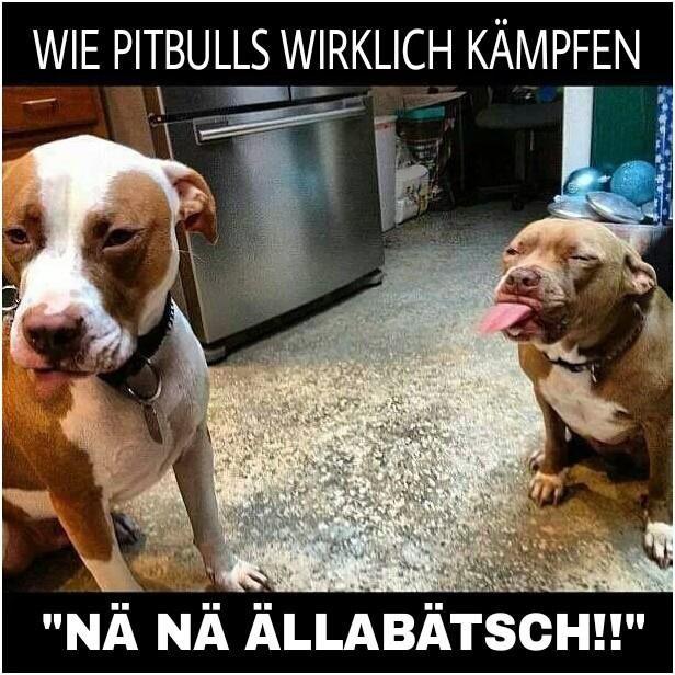 Fotos Jack Russell Terrier Hunde Toilette Lustige Kreativ