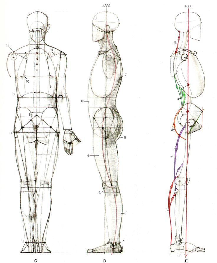 AnatoRef | Male torso | Pinterest | Anatomy, Drawing designs and Draw