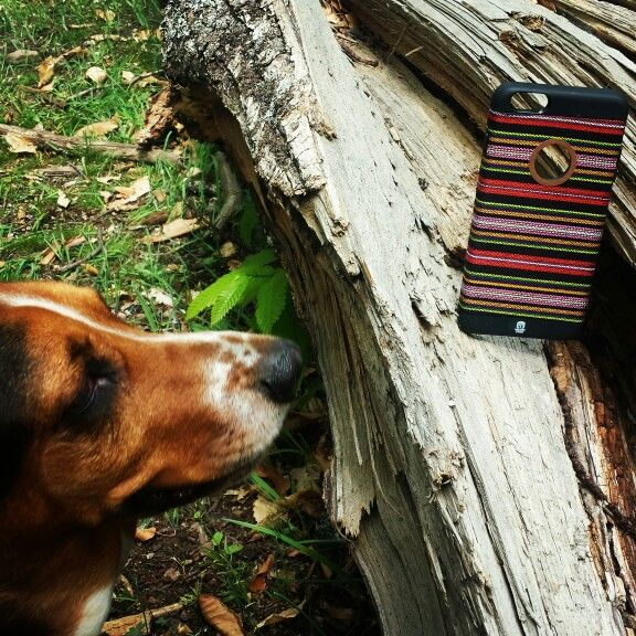 Even Fiona loves Mayan Case!!  www.mayancase.com