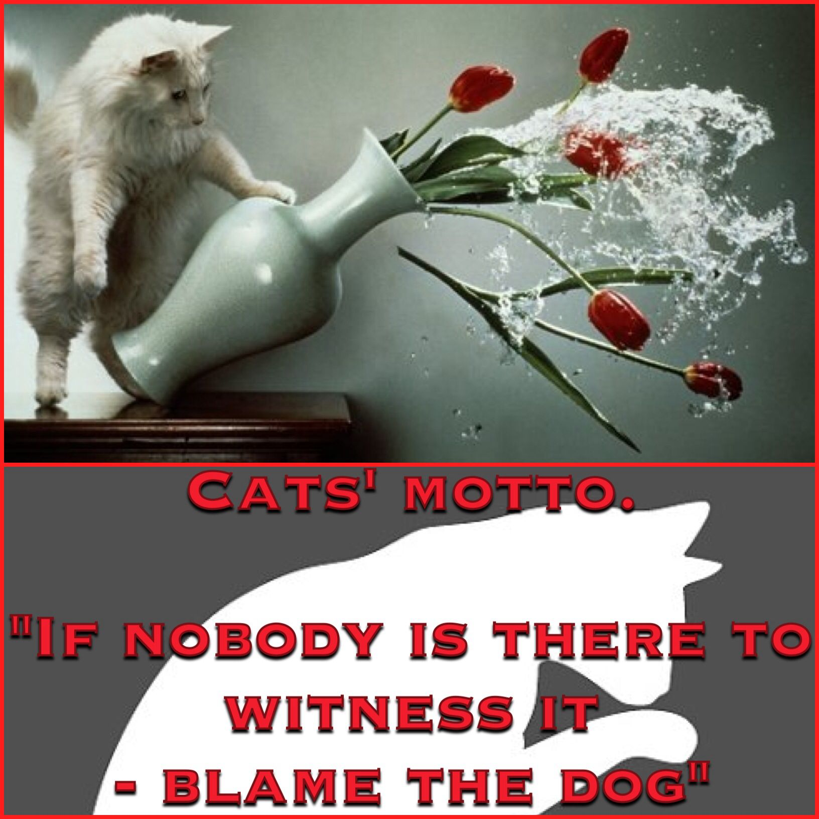Cats' motto
