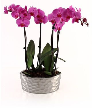 orchid planter care just add ice orchids orchid pinterest. Black Bedroom Furniture Sets. Home Design Ideas