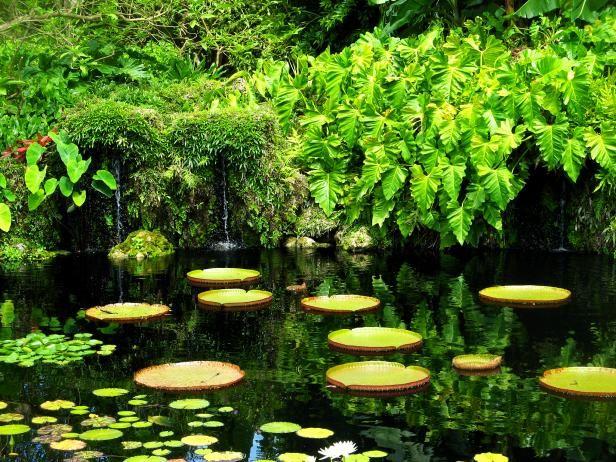 Florida's Best Botanical Gardens #botanicgarden