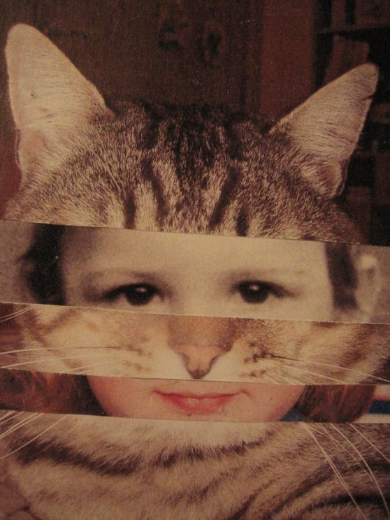 cat collage | Francesca giardina (Natale, fai da te) | Pinterest | Face collage, Graphic design and Collage