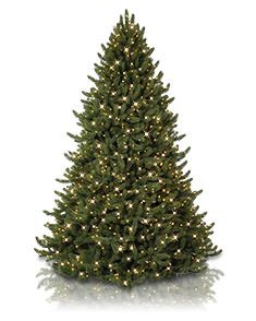 Pre Lit Artificial Christmas Trees - Clear Lights | Balsam ...