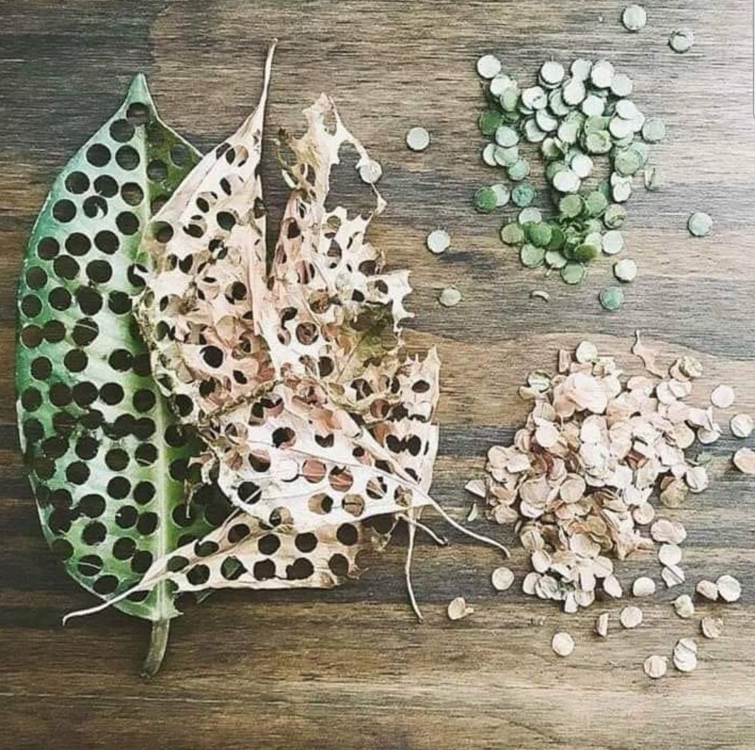 Image result for leaf confetti