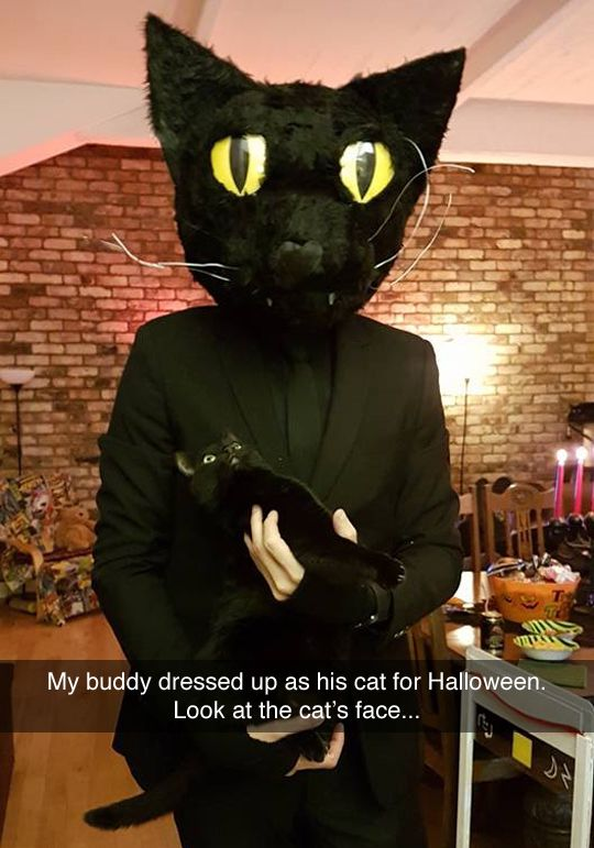 cat stuff this guy dressed up as his cat for halloween his cats reaction is priceless - Funny Cat Halloween