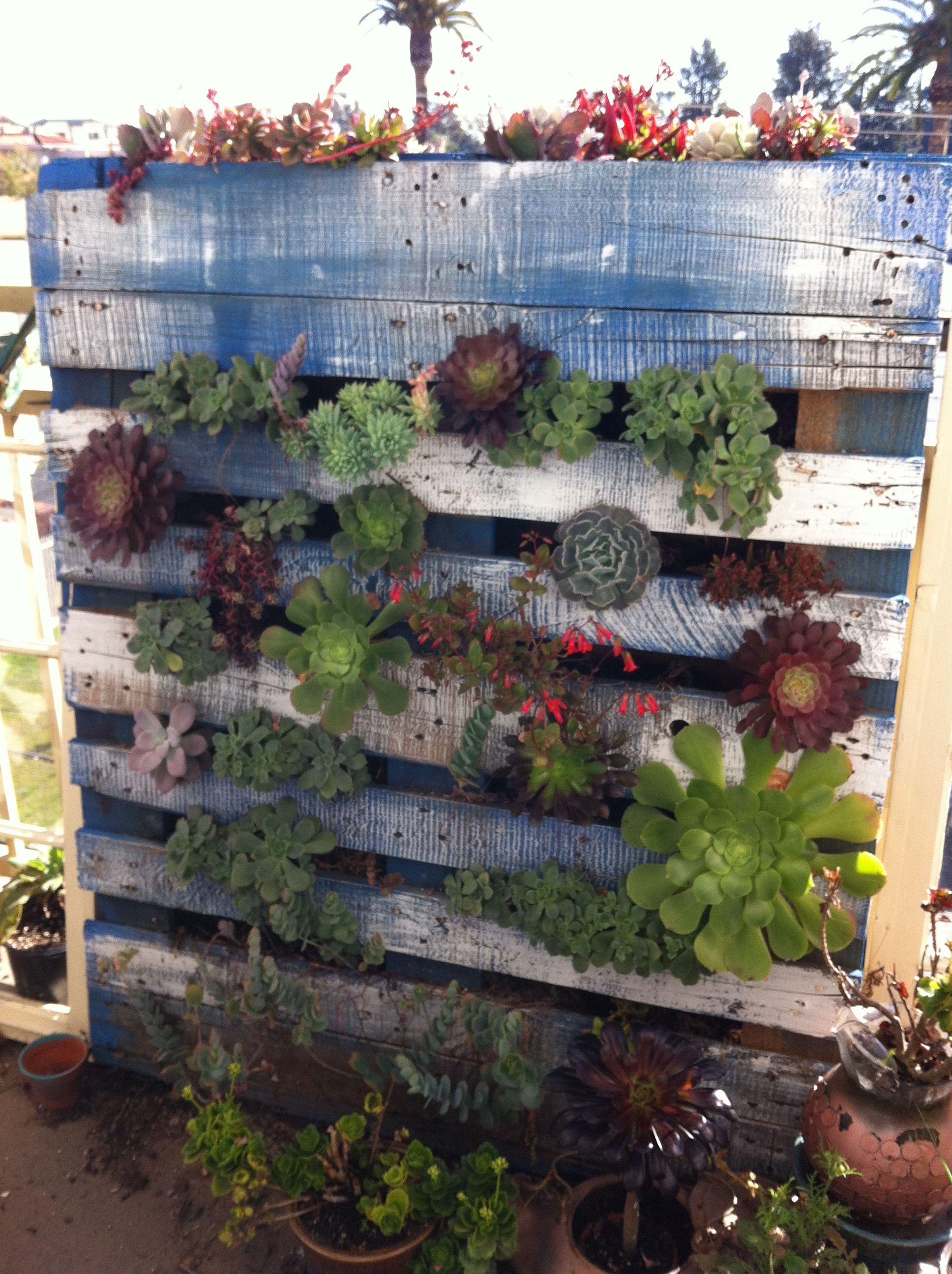 Vertical succulent garden for small balconies home for Balcony vertical garden ideas