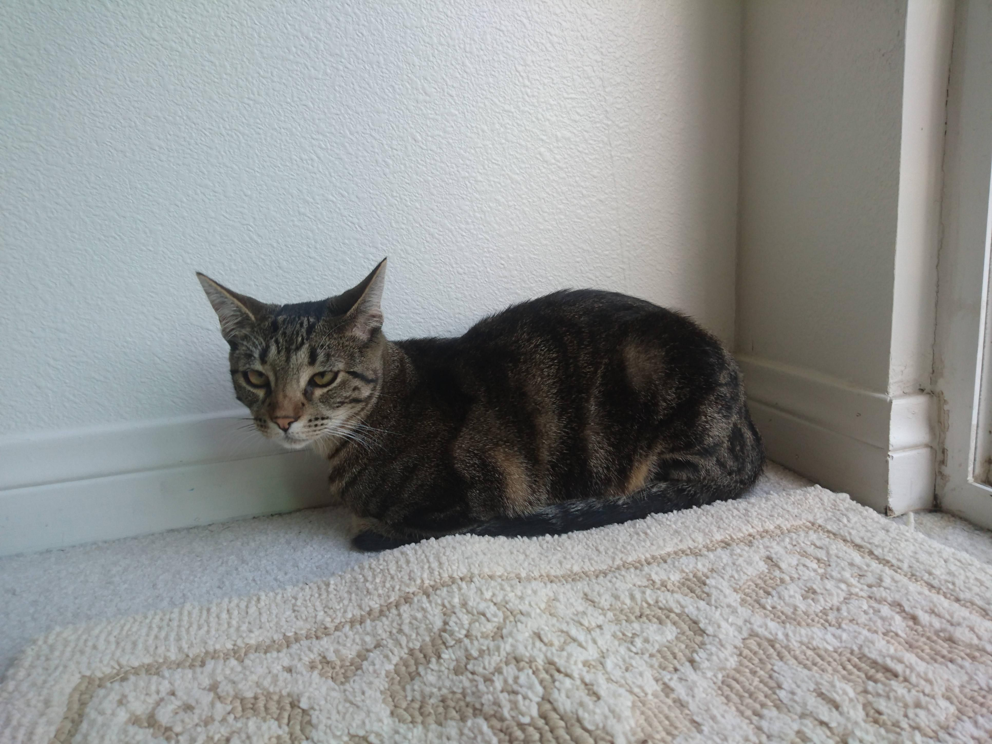 My Little Kitten Loaf Little Kittens Kitten Cat S