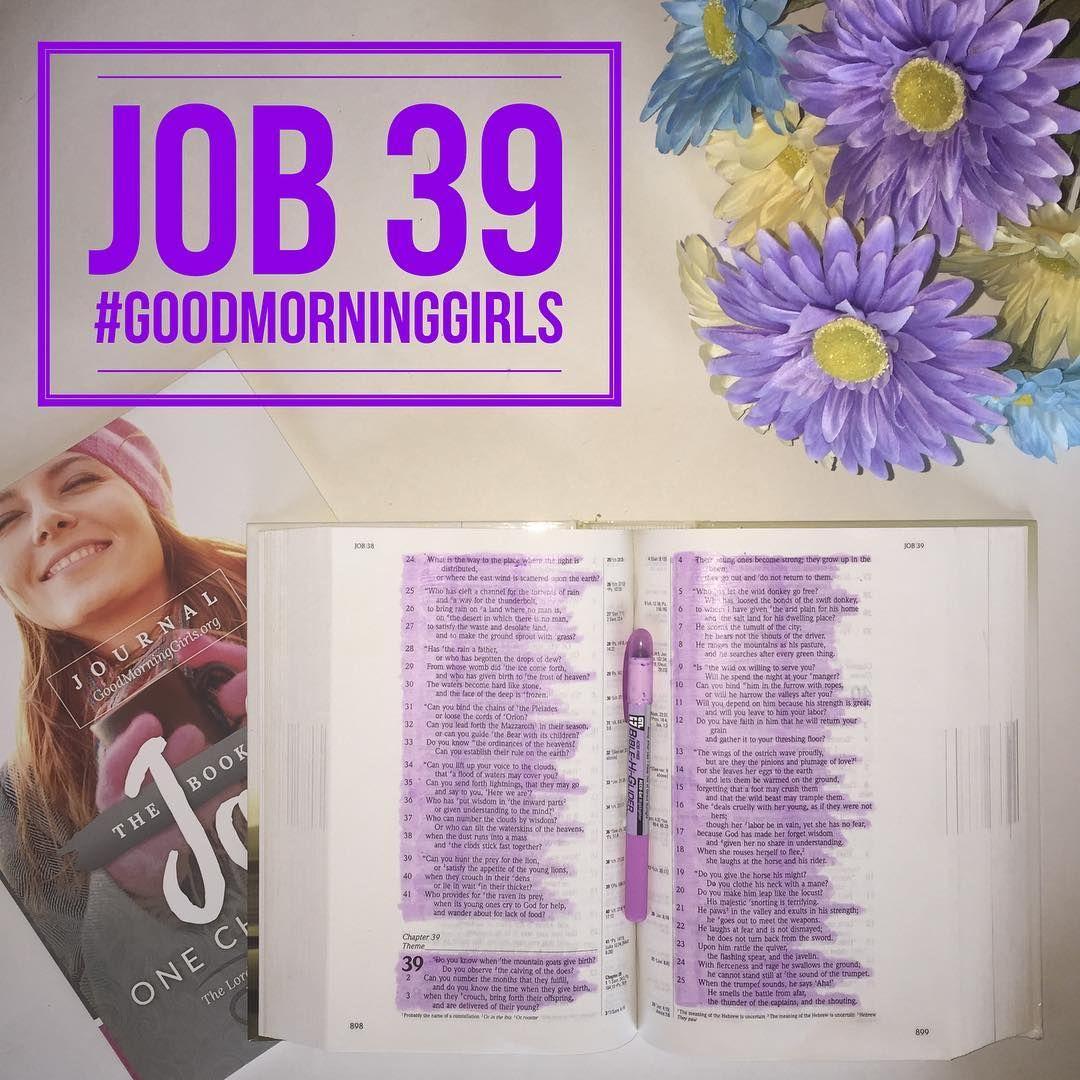 JOB 39 Book of job, Online bible study, Good morning girls