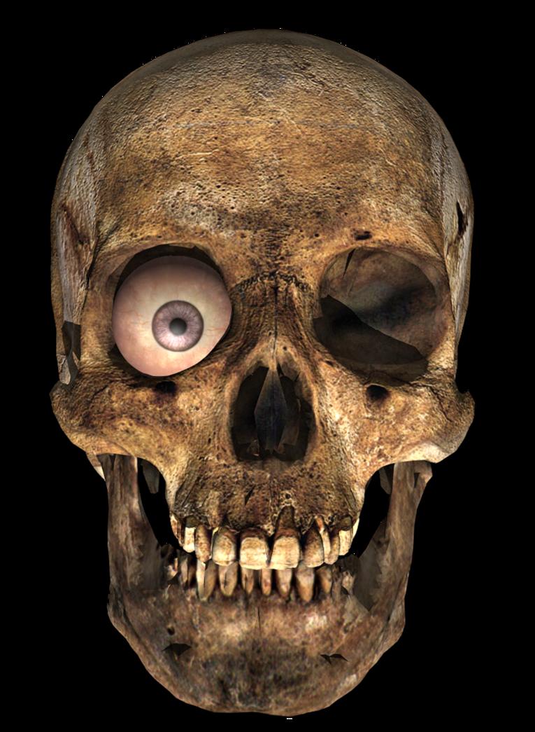 Skull Png Image Skull Png Transparent Background