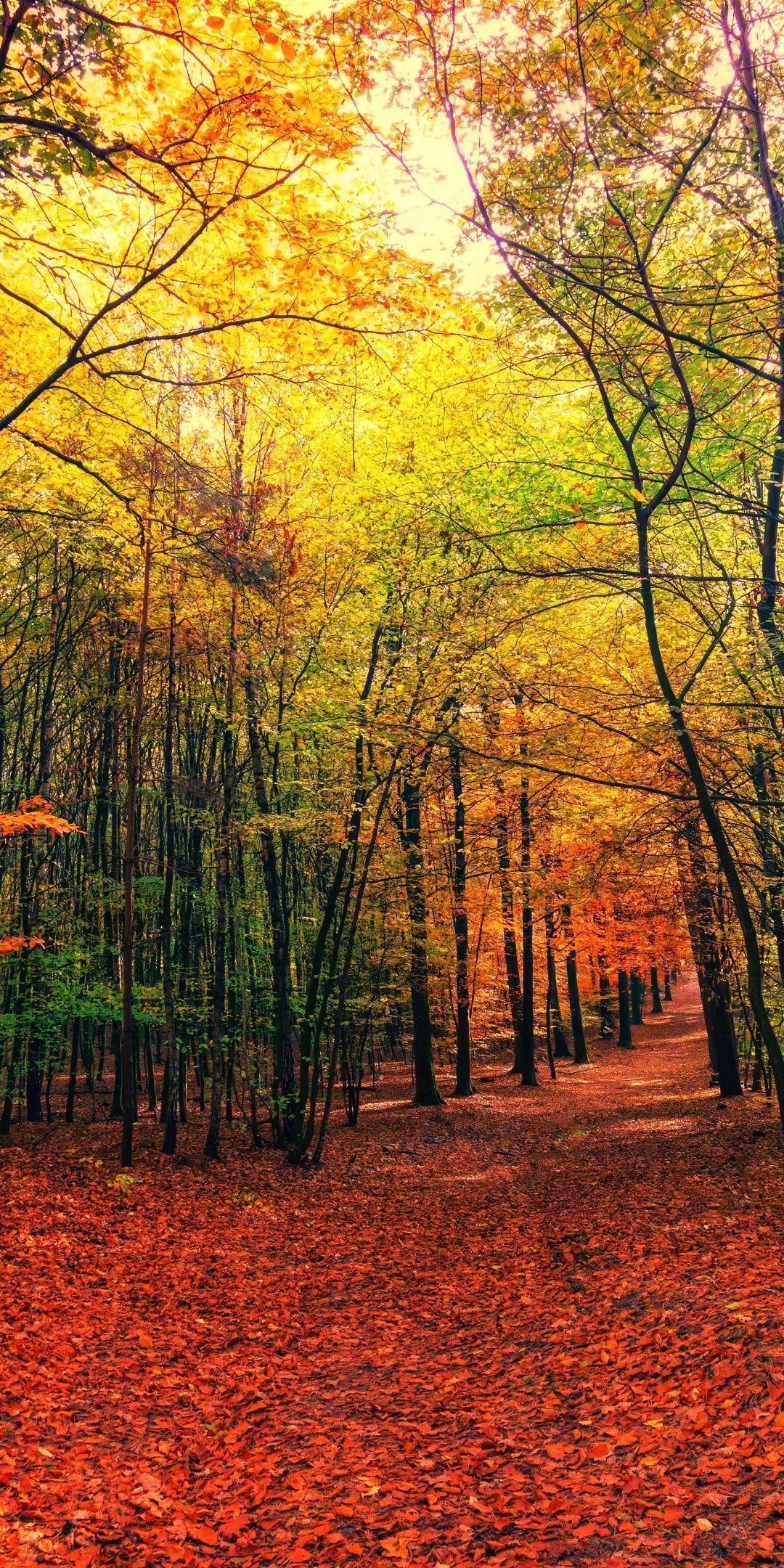 Autumn Leaves Fall Tree Forest Nature 1080x2160 Wallpaper Best Nature Wallpapers Nature Backgrounds Iphone Nature Wallpaper