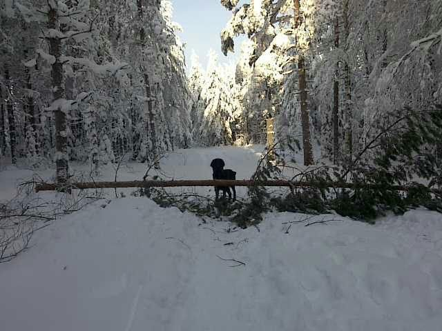 Behind the fallen tree.