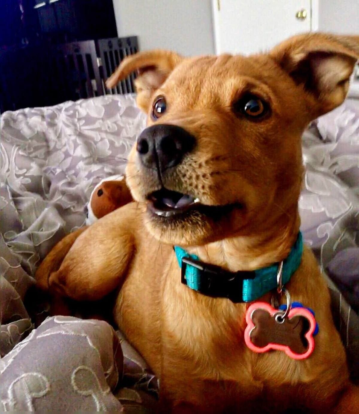 Pin by Liz on Dogs Scooby doo dog, Puppies, Cute animals