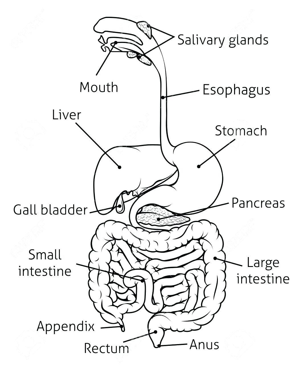 Pin By Aaron Rathinam On Nursing Med Digestive System Diagram Human Digestive System Digestive System For Kids