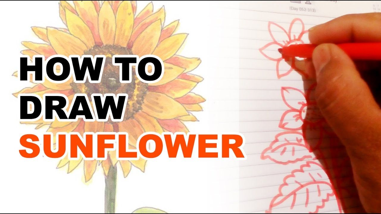 How to draw sunflower सरजमख step by step very easy