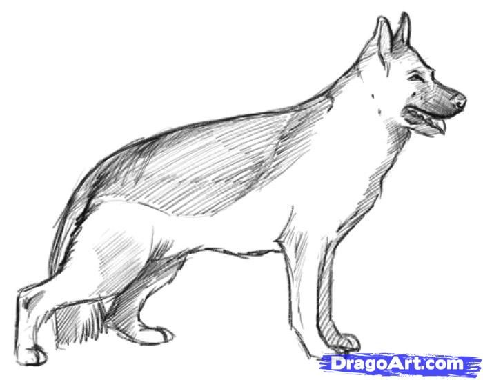 How to draw a realistic dog draw real dog step by step