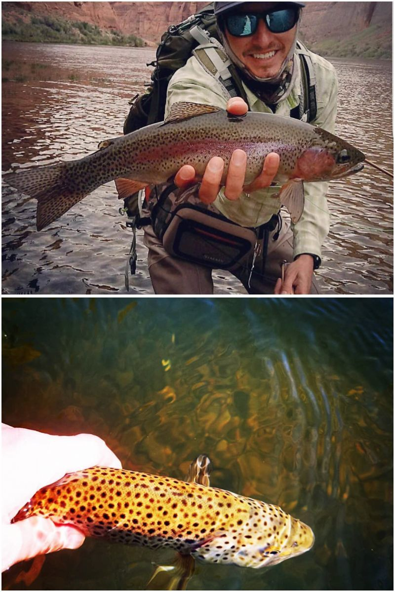 Use night crawlers, minnows or salmon for live bait to