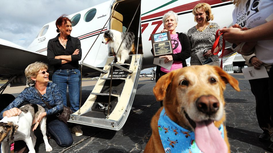 Volunteer pilots help dogs get a second chance at life