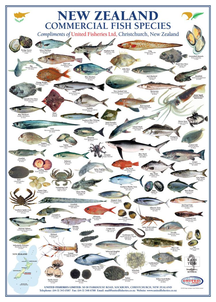 New zealand commercial fish species united fisheries for Types of pet fish