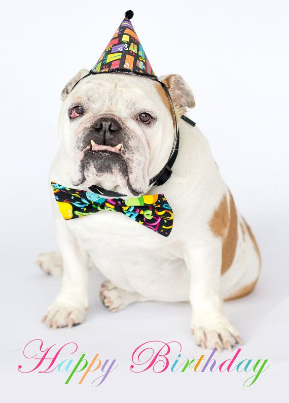 Happy Birthday Bulldog Funny Happy Birthday Wishes Dog Birthday