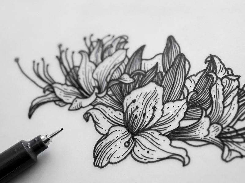 Azalea Flowers Illustration In 2020 Azalea Flower Flower Illustration Tattoos