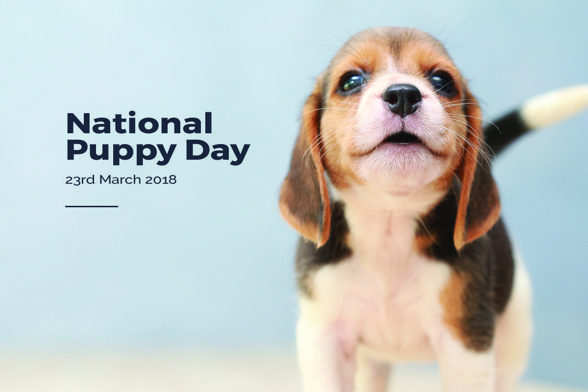 8 WONDERFUL OFFERS YOU NEED THIS NATIONAL PUPPY DAY BY FARM & PET PLACE