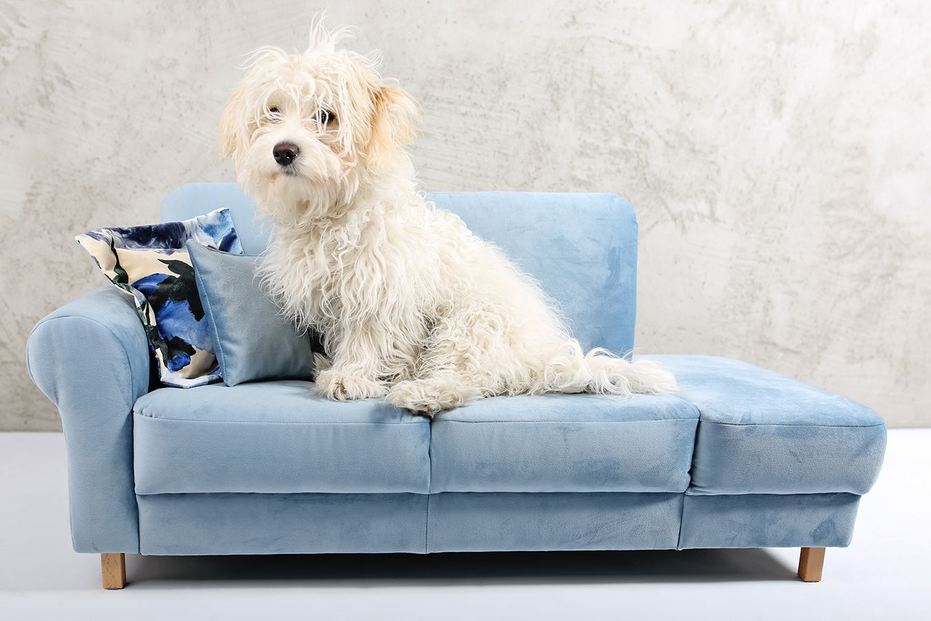 Legowisko Dla Psa Mini Sofa Lezanka Love Seat Furniture Decor