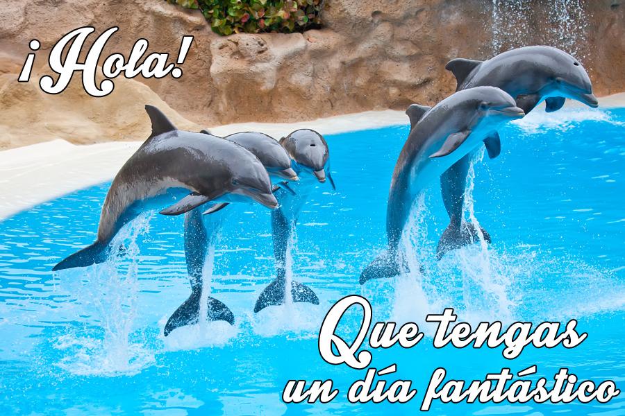 Pin De Maria En Delfines Feliz Feliz Cumpleanos Y Feliz Dia