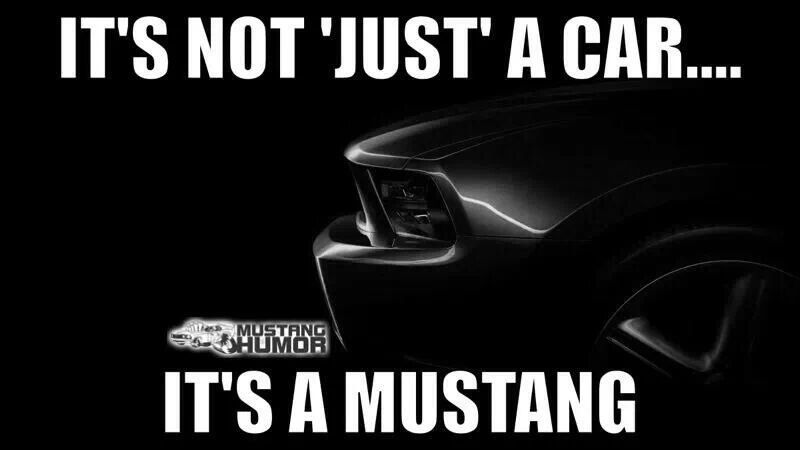 My Thoughts Exactly Mustang Cars Mustang Mustang Humor