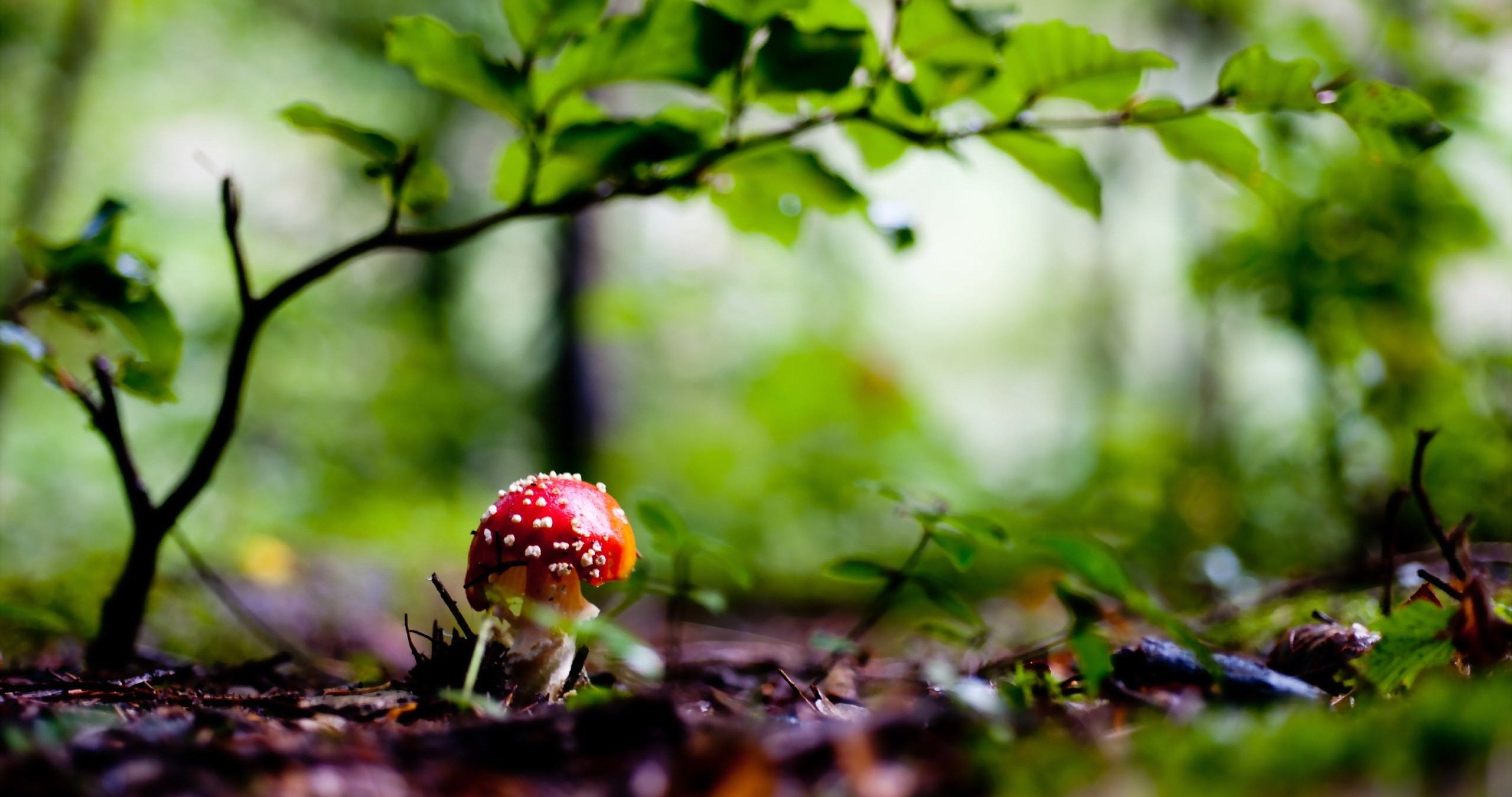 Green Beautiful Nature 4k Ultra Hd Wallpaper Mushroom Wallpaper Mushroom Images Beautiful Nature