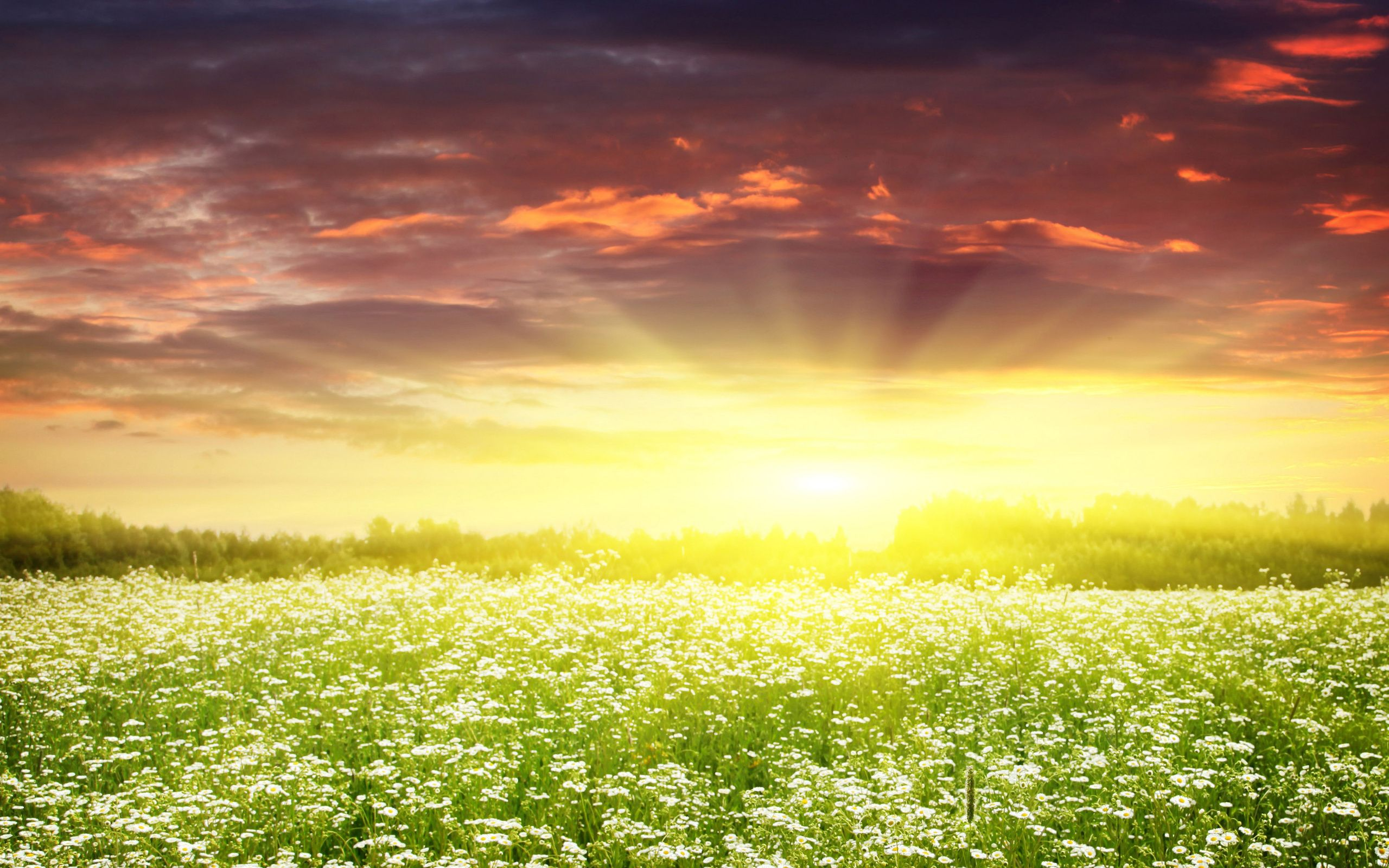 HD Wallpapers Dream Spring 2012