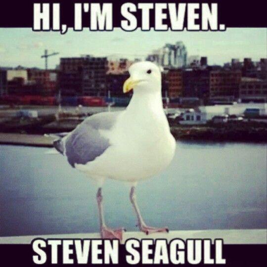 Hi Steven