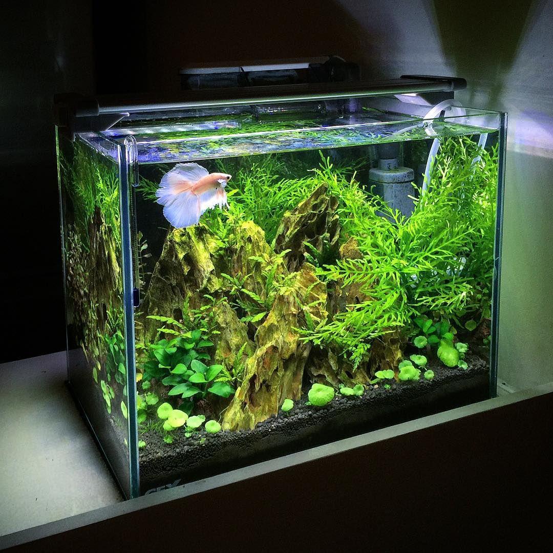 Life In Transparent Tank