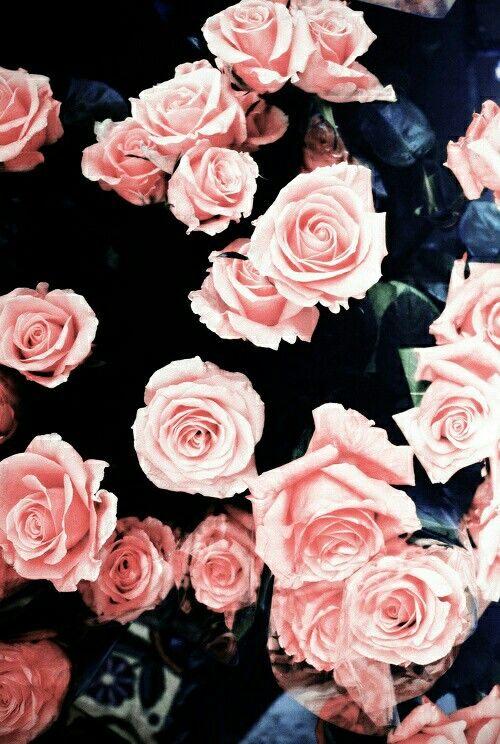 As rosas mais lindas