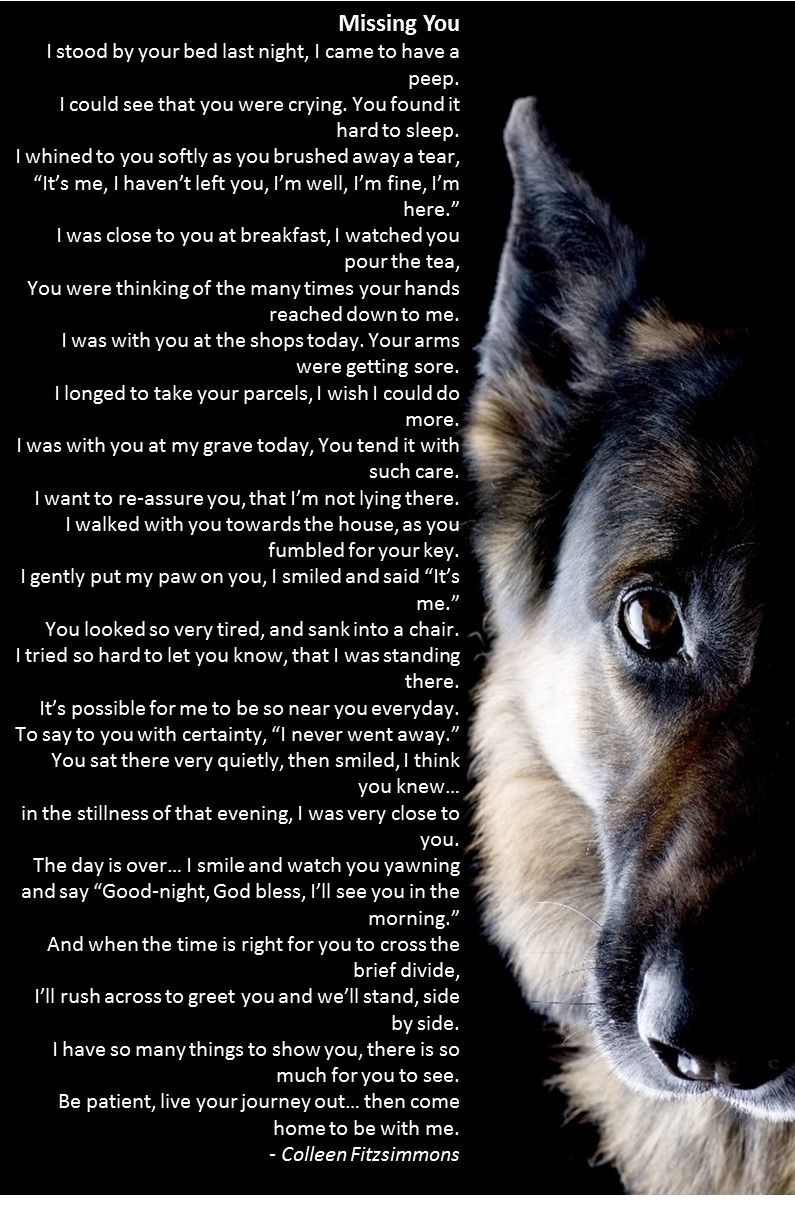 2017 Here We Come Best Trained German Shepherd Protection Dogs