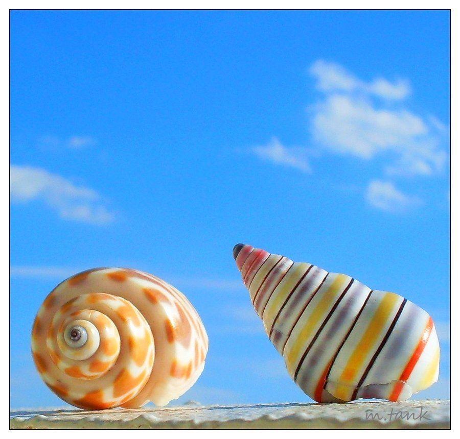 Shells Sea Shells Sea Ocean Treasures