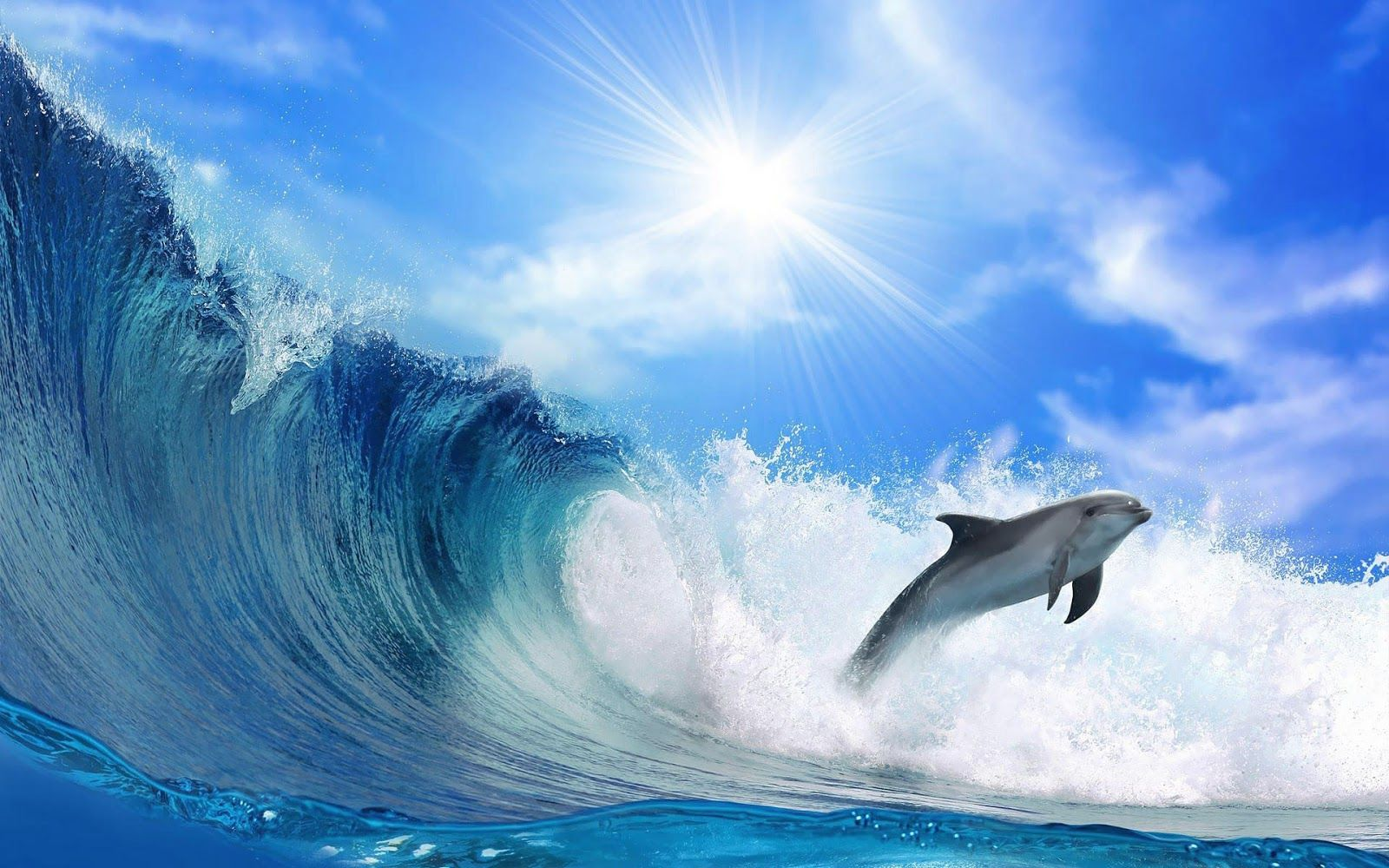 beautiful wallpaper Beautiful wallpaper of a dolphin and