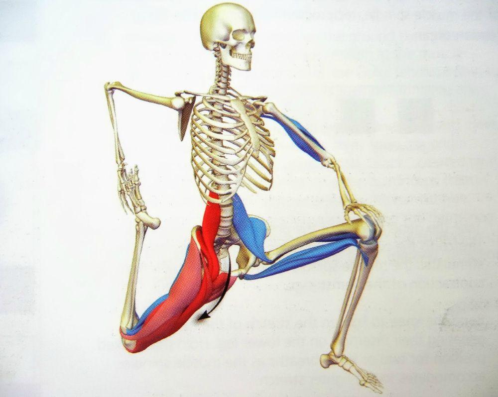 The 30-Second Fix for Tight Hip Flexors   Tight hip flexors, Tight ...