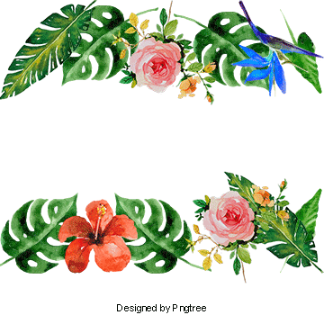 Vector Summer Flowers Decoration Frame Tropical Plants Png Transparent Clipart Image And Psd File For Free Download Vector Flowers Watercolor Flower Background Flower Graphic