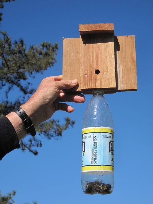 Carpenter Bee Trap Qdma Forums Pest Control