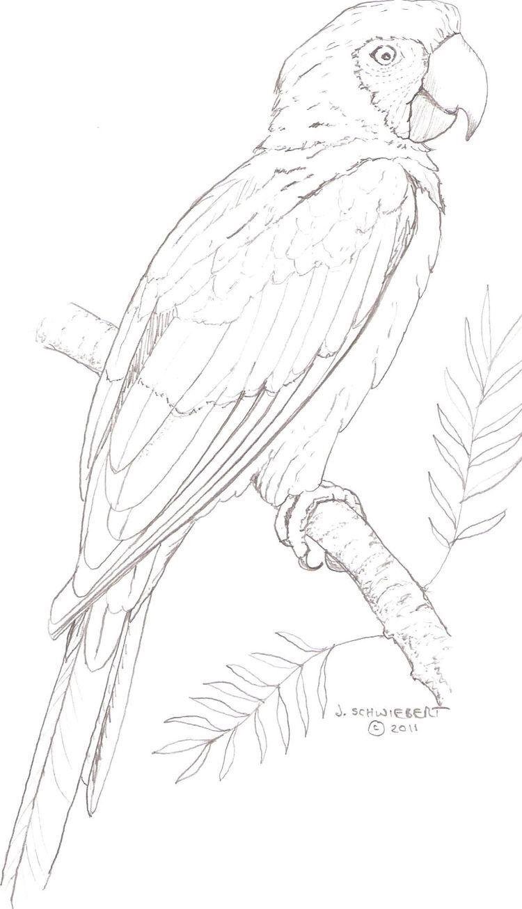 Pin De Ady Lopez En Loros Arte De Aves Pintura De Pajaros Dibujos De Pajaro