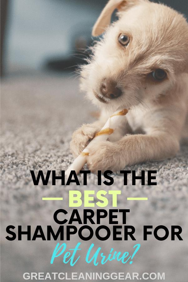 Best Carpet Shampooer For Pet Urine Carpet Cleaning Tips