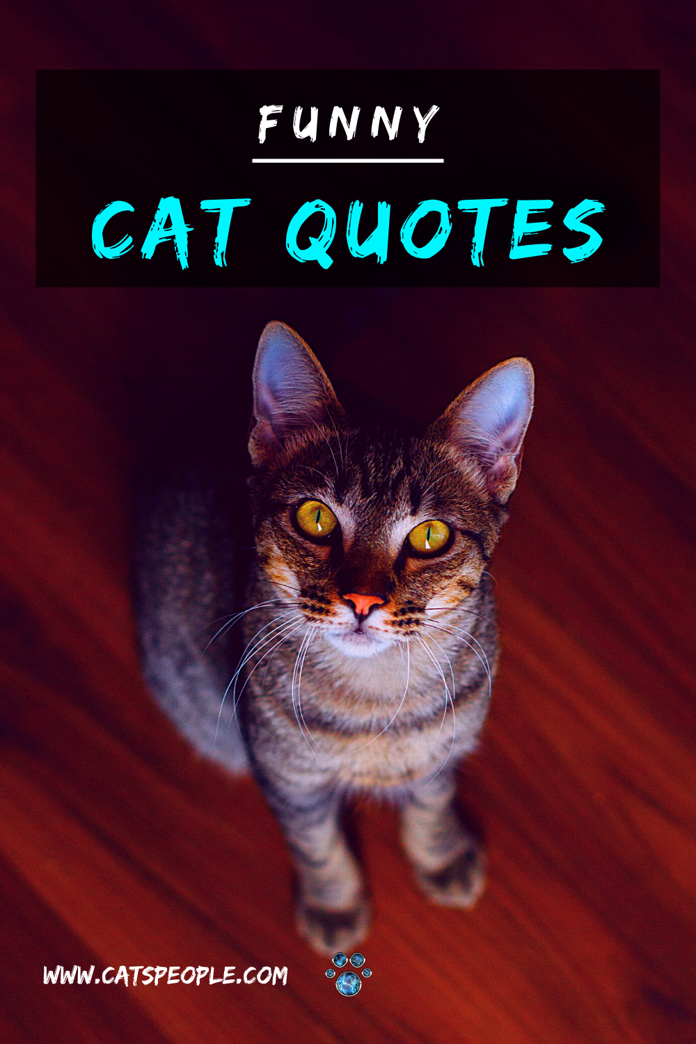 20 Funny Cat Quotes In 2020 Cat Quotes Funny Cat Quotes Funny Cats