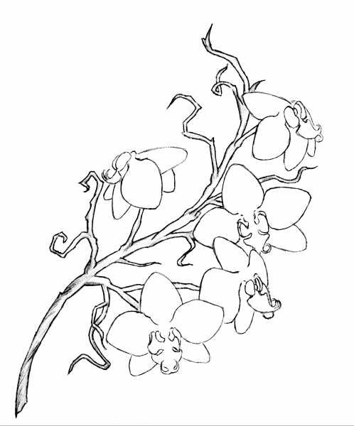Picturing Ink Outline Over The Shoulder A Rough Orchid Tattoo