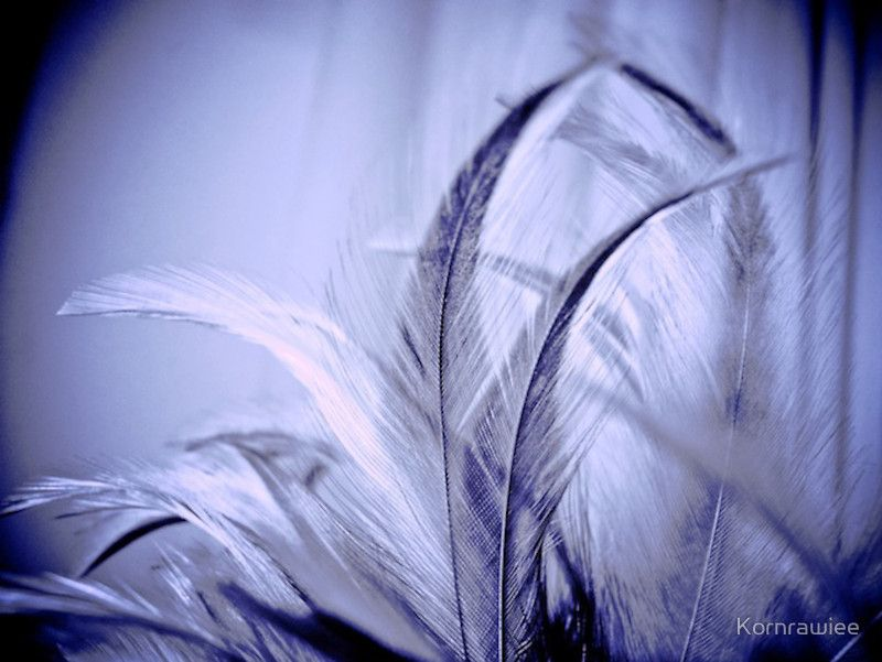 Her feathers and the moonlight